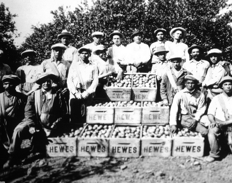 Orange County Immigrant Workers, 1920s