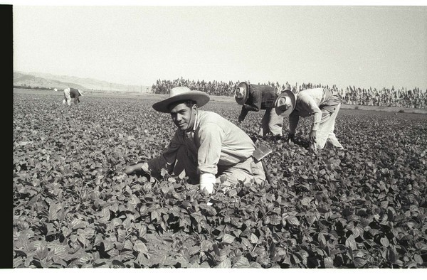 "Pepper Bracero (Braceros meaning ""manual worker"")"