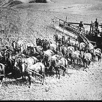 Horse-power farming machine in the Palouse in the 1920's
