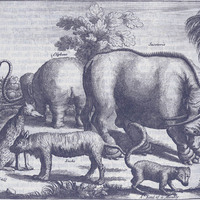 Tropical animals from Nieuhof's Remarkable Voyages