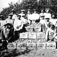 orange county immigrant workers 1920s.jpg