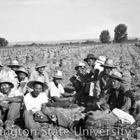 Group of men from Heart Mountain eating in an onion field in Nyssa, Oregon