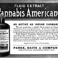 Cannabis Amaricana.jpg