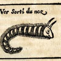 Nose worm